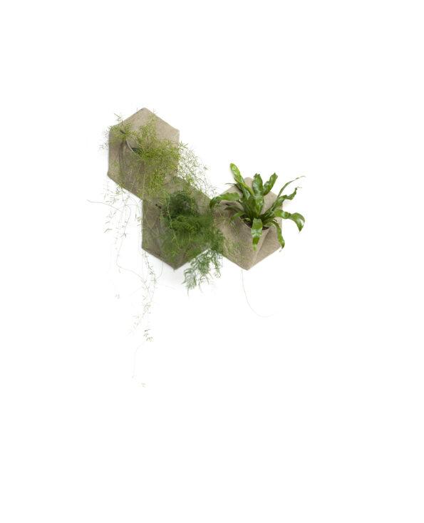 QG_3_greens_plant